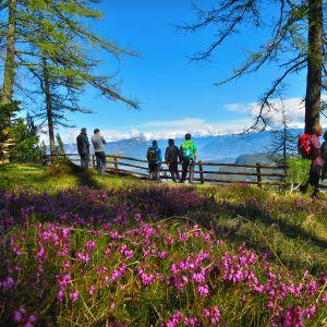Die Erika blühen bereits im Naturpark Trudner Horn (c) Karmen Nahberger