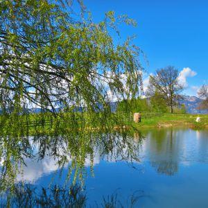 Der Teich auf der Cisloner Alm