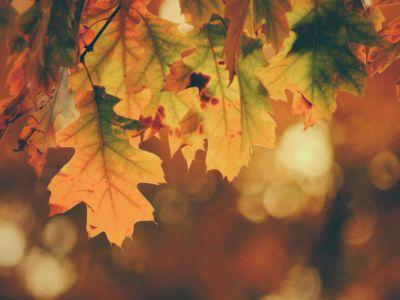 Herbst, Blätter, unsplash