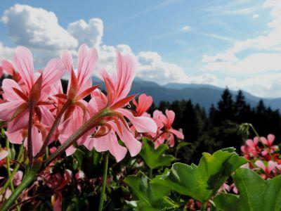 Langeshof Aussicht Blume