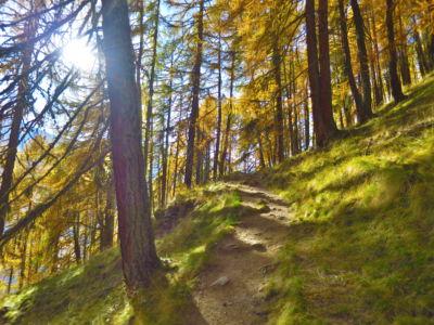 Waldbaden im Lärchenwald