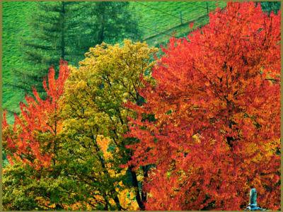 herbstlicher Bäume © Hotel Langeshof